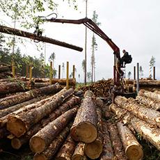 экспорт леса украина