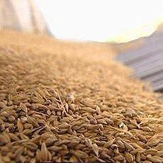 экспорт зерна из украины